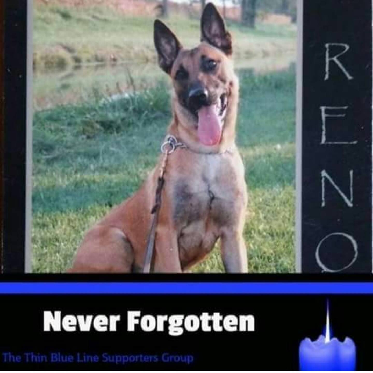 K9 Reno Carroll County IN